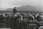 La lande d'Avezac, plateau de Lannemezan