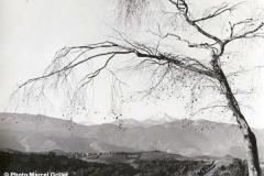 Vue sur le Pic du Midi