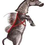 Le Drac: âne rouge ou diable