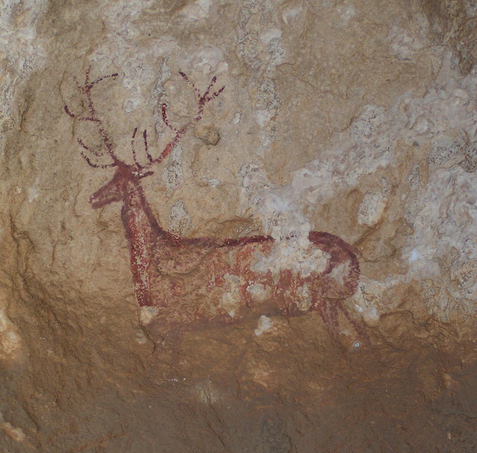 Le cerf de Chimiachas